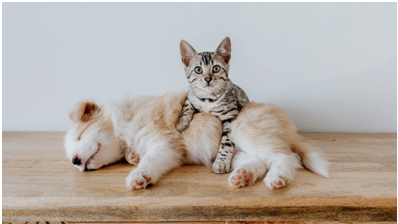 Make Your Moving Stressless For Your Pets!